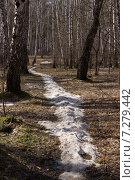 Тропинка в весеннем лесу. Стоковое фото, фотограф Alexander Zholobov / Фотобанк Лори