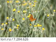 Бабочка на цветке. Стоковое фото, фотограф Ivanikova Tatyana / Фотобанк Лори