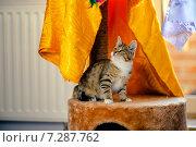 Котенок сидит на подиуме. Стоковое фото, фотограф Савчук Алексей / Фотобанк Лори