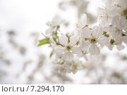 Весна. Стоковое фото, фотограф Роман Филатов / Фотобанк Лори
