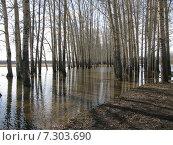 Разлив на р. Нерль недалеко от Боголюбово. Стоковое фото, фотограф Надежда Тимахова / Фотобанк Лори