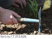 Садовый инструмент в руке. Стоковое фото, фотограф Ivanikova Tatyana / Фотобанк Лори
