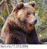 Медведь в зоопарке. Стоковое фото, фотограф Ирина Быстрова / Фотобанк Лори