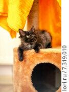 Чёрный котёнок сидит на своём домике. Стоковое фото, фотограф Савчук Алексей / Фотобанк Лори