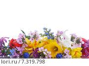 Купить «Букет весенних цветов на белом фоне», фото № 7319798, снято 24 апреля 2015 г. (c) Peredniankina / Фотобанк Лори