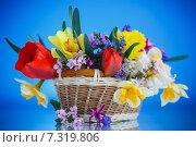 Купить «Букет весенних цветов в корзине на синем фоне», фото № 7319806, снято 24 апреля 2015 г. (c) Peredniankina / Фотобанк Лори