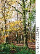Купить «Осенний лес», фото № 7332698, снято 18 ноября 2014 г. (c) Татьяна Кахилл / Фотобанк Лори
