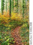 Купить «Тропинка в осеннем лесу», фото № 7333330, снято 18 ноября 2014 г. (c) Татьяна Кахилл / Фотобанк Лори