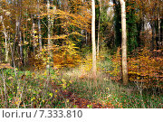 Купить «Осенний лес», фото № 7333810, снято 18 ноября 2014 г. (c) Татьяна Кахилл / Фотобанк Лори