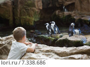Купить «Little boy looking at penguins», фото № 7338686, снято 28 января 2015 г. (c) Wavebreak Media / Фотобанк Лори