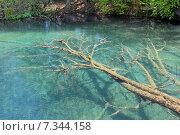 Купить «Croatia, Plitvicka Jezera, Plitvice Lakes National Park, Plitvice Lakes National Park», фото № 7344158, снято 18 декабря 2018 г. (c) BE&W Photo / Фотобанк Лори