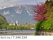Slovenia, Bled, Lake Bled and Cerkev Sv. Martina (Church of St. Martin) - Bled, Slovenia. Стоковое фото, агентство BE&W Photo / Фотобанк Лори
