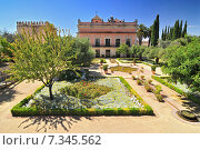 Купить «Gardens in the Alcazar de Jerez, Jerez de la Frontera, Andalusia, Spain», фото № 7345562, снято 5 июня 2020 г. (c) BE&W Photo / Фотобанк Лори