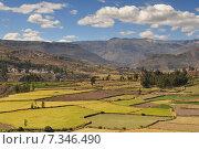 peru - colca canyon, canyon of the colca river in southern peru.Peru, Colca Valley, Terrace Cultivation. Стоковое фото, агентство BE&W Photo / Фотобанк Лори