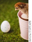 Купить «Stuffed chick in pink bucket», фото № 7377470, снято 6 февраля 2015 г. (c) Wavebreak Media / Фотобанк Лори