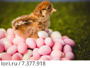 Купить «Stuffed chick with easter eggs», фото № 7377918, снято 6 февраля 2015 г. (c) Wavebreak Media / Фотобанк Лори