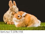 Купить «Ginger bunny rabbit», фото № 7378118, снято 6 февраля 2015 г. (c) Wavebreak Media / Фотобанк Лори