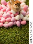 Купить «Stuffed chick with easter eggs», фото № 7378454, снято 6 февраля 2015 г. (c) Wavebreak Media / Фотобанк Лори