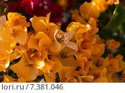Бугенвиллея оранжевая (лат. Bougainvillea) Стоковое фото, фотограф Лада Иванова / Фотобанк Лори