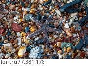 Коричневая морская звезда на камнях. Стоковое фото, фотограф eva cuba air / Фотобанк Лори
