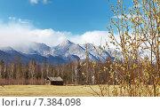 Весна в Тункинской долине. Цветущая ива на фоне гор. Стоковое фото, фотограф Виктория Катьянова / Фотобанк Лори