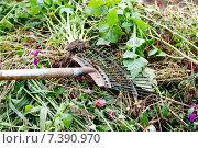 Купить «Садовая грабли», фото № 7390970, снято 19 сентября 2012 г. (c) Татьяна Кахилл / Фотобанк Лори