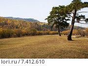 Купить «Две сосны», эксклюзивное фото № 7412610, снято 24 сентября 2007 г. (c) Александр Щепин / Фотобанк Лори