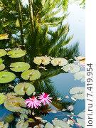 Купить «Красные водяные лилии в пруду с красочными отражениями тропического леса в Керале на юге Индии», фото № 7419954, снято 22 января 2012 г. (c) Олег Иванов / Фотобанк Лори