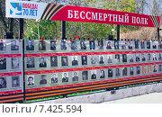 """Стена памяти с фотографиями """"Бессмертный полк"""" (2015 год). Редакционное фото, фотограф Николай Лемешев / Фотобанк Лори"""