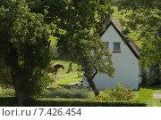 Greaves, Hiddensee, Germany, small house next to a paddock. Стоковое фото, агентство Caro Photoagency / Фотобанк Лори