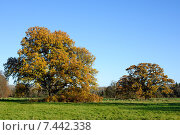 Купить «Осенний парк», фото № 7442338, снято 4 декабря 2013 г. (c) Татьяна Кахилл / Фотобанк Лори