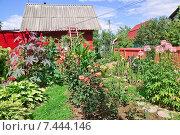 Купить «Дачный участок с домиком», эксклюзивное фото № 7444146, снято 23 августа 2014 г. (c) Алёшина Оксана / Фотобанк Лори
