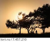 Оранжевый закат и силуэты сосен. Стоковое фото, фотограф Alexey Matushkov / Фотобанк Лори