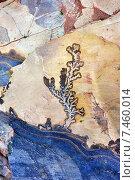 Купить «Отпечаток древнего окаменелого растения на камне, город, Сик, Петра, Иордания», фото № 7460014, снято 2 апреля 2015 г. (c) Знаменский Олег / Фотобанк Лори