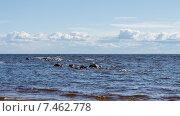 Купить «Финский залив», фото № 7462778, снято 4 мая 2015 г. (c) Мария Козаченко / Фотобанк Лори