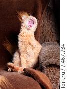 Купить «Рыжий кот зевает сидя на диване», фото № 7467734, снято 22 мая 2015 г. (c) Яна Королёва / Фотобанк Лори