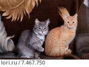 Купить «Два кота серый и рыжий», фото № 7467750, снято 22 мая 2015 г. (c) Яна Королёва / Фотобанк Лори