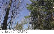 Купить «Весна. Весенний лес», видеоролик № 7469810, снято 24 мая 2015 г. (c) Звездочка ясная / Фотобанк Лори