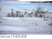 Тундра в мае. Стоковое фото, фотограф Николай Новиков / Фотобанк Лори