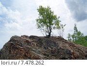 Одинокое дерево на скале. Стоковое фото, фотограф Ирина Буржинская / Фотобанк Лори