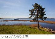 Купить «Сосна на берегу озера», фото № 7486370, снято 10 мая 2015 г. (c) Андрей Родионов / Фотобанк Лори