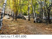 Купить «Березовый лес у реки Никишихи. Забайкальский край», эксклюзивное фото № 7491690, снято 24 сентября 2007 г. (c) Александр Щепин / Фотобанк Лори