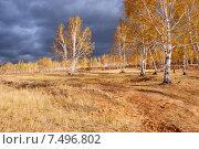 Купить «Опушка леса. Березы», эксклюзивное фото № 7496802, снято 26 сентября 2007 г. (c) Александр Щепин / Фотобанк Лори