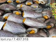 Купить «stuffed fish or seafood at asian street market», фото № 7497918, снято 7 февраля 2015 г. (c) Syda Productions / Фотобанк Лори