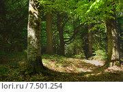 Купить «Леса Кавказа», фото № 7501254, снято 21 мая 2015 г. (c) александр жарников / Фотобанк Лори