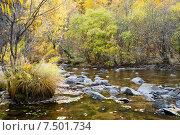 Купить «Река Никишиха. Забайкальский край», эксклюзивное фото № 7501734, снято 26 сентября 2007 г. (c) Александр Щепин / Фотобанк Лори