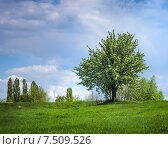 Цветущее дерево. Стоковое фото, фотограф Андрей Соколов / Фотобанк Лори
