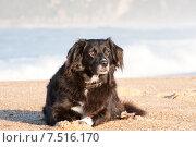 Купить «Собака на пляже», фото № 7516170, снято 29 декабря 2013 г. (c) Татьяна Кахилл / Фотобанк Лори