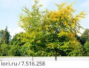 Купить «Начало осени», фото № 7516258, снято 16 сентября 2014 г. (c) Татьяна Кахилл / Фотобанк Лори