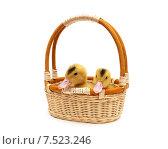 Два утёнка в плетеной корзине. Стоковое фото, фотограф Ласточкин Евгений / Фотобанк Лори